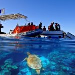 jcu research boat on the great barrier reef with sea turtle